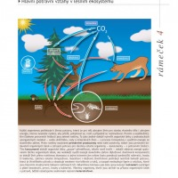 Šumavské smrčiny - potravní řetězec